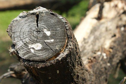 Wood, Tree, Tree Log, Nature, Outdoors, Log, Pattern