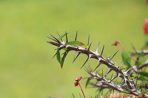 Nature, Leaf, Flora, Spine, Outdoors, Sharp, Spikes