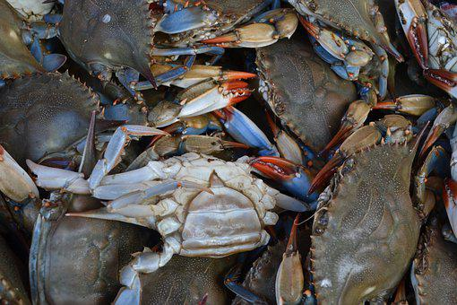 Seafood, Crustacean, Shellfish, Crab, Market