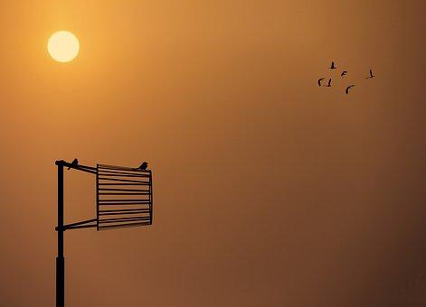 Sunset, Sun, Sky, Dusk, Outdoors, Bird, Evening
