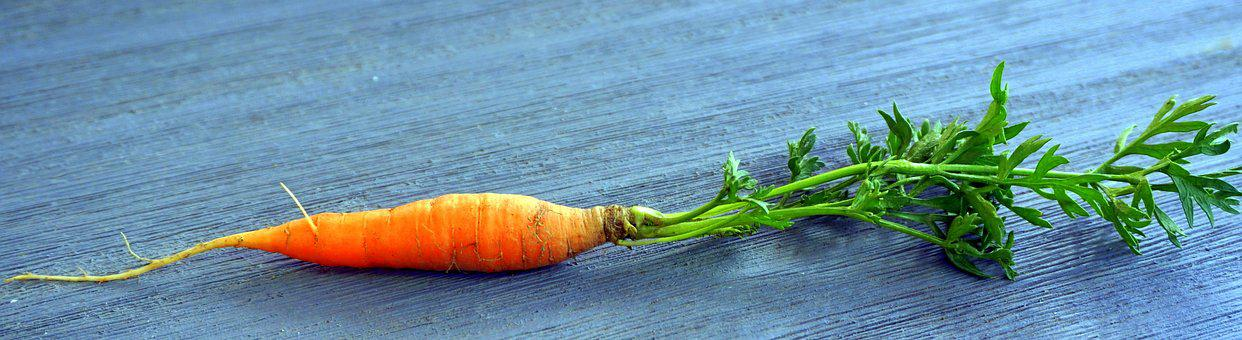 Carrot, Table, Panorama, Background