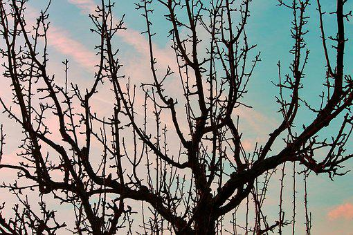 Fruit Tree, Silhouette, Aesthetic, Branches, Tree