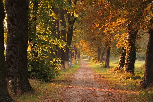 Fall, Tree, Leaf, Park, Footpath, Autumn, Outdoor