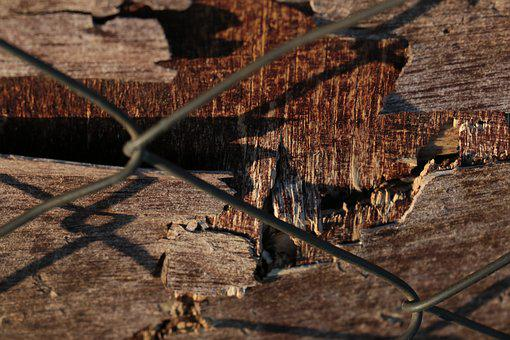 Nature, Wood, Outdoors, Dry, Tree, Old, Travel