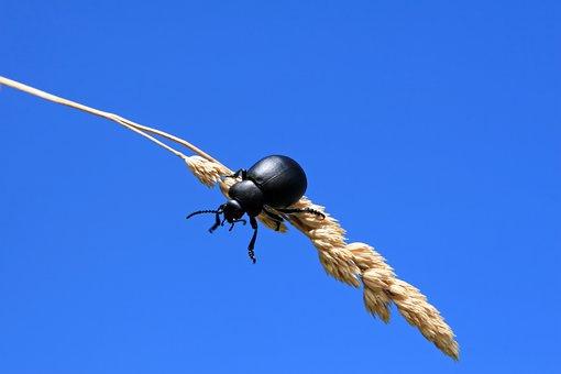 Agriculture, Animal, Arthropod, Beautiful, Beetle