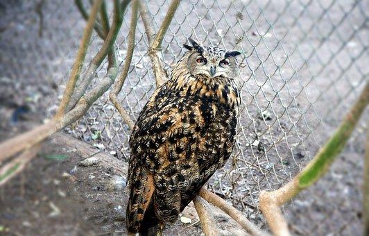Owl, Barn, Wild, Bird, Wildlife, Beak, Prey, Avian