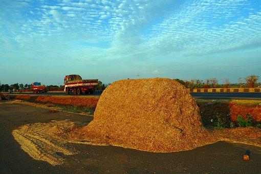 Sorghum, Chaff, Jowar, Bagasse, Fodder, Crop Residue