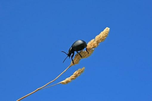 Agriculture, Animal, Arthropod, Beautiful, Beetle