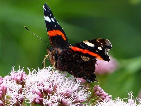 Butterfly, Flower, Insect, Macro, Spring, Grass, Bird