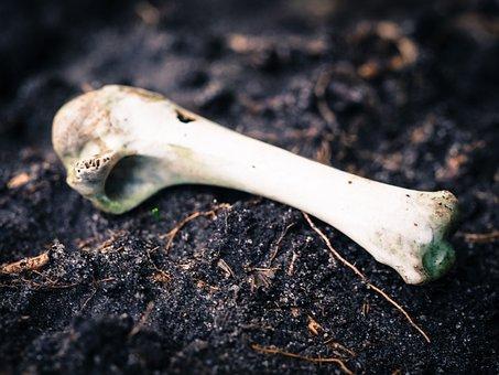 Bone, Animal, Decay, Skeleton, Nature, Weird