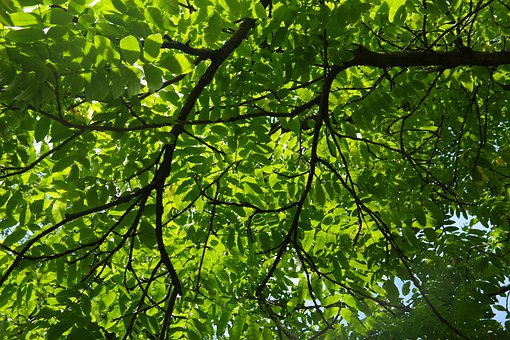 Branch, Leaves, Green, Backlighting