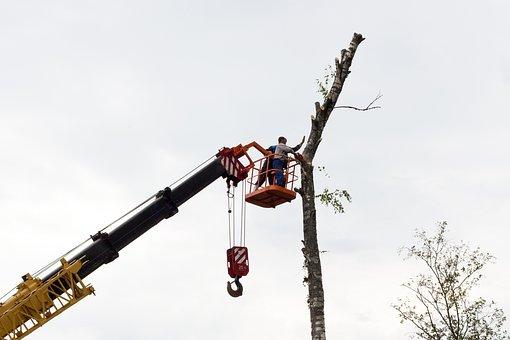 Sawing, Tree, Birch, Chainsaw, On High, Working, Crane
