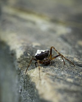 Spider, Creepy, Insect, Nature, Creepy-crawly, Bug