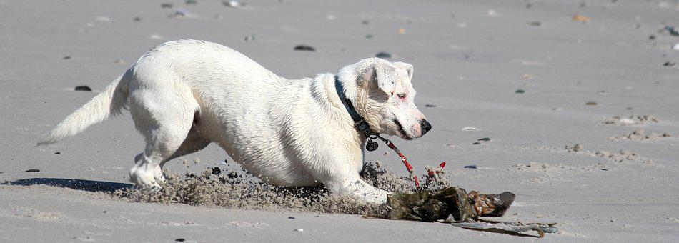 Dog, Beach, Sea, Screeching Halt, Most Beach