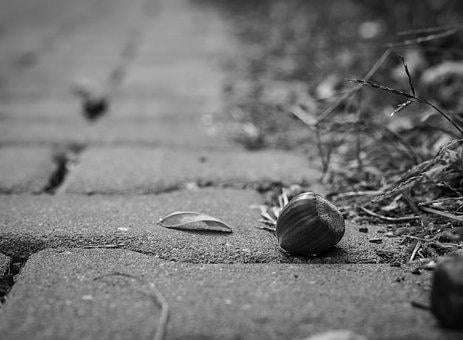 Pavement, Acorn, Fetus, Path, Black And White, Travel