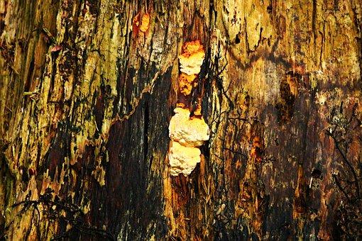 Mushroom, Sponge, Dead Wood, Tree Stump, Forest, Nature