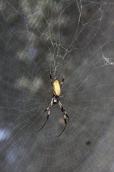 Spider, Pest, Insect, Bug, Creepy, Crawly, Orange