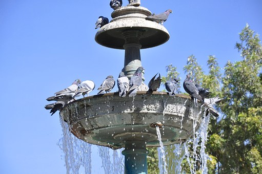 Source, Pigeons, Pool, Water, Peru, Hot, Summer