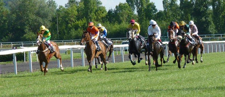 Hippodrome, Horse, Race, Racing, Pmu, Jockeys, Horses