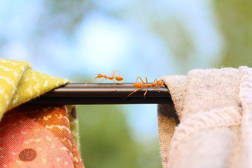 Ant, Natural, Cloth, Insects, Red