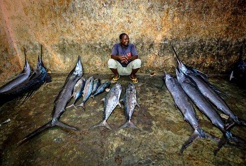 Sailfish, Fish, Selling Fish, Fish Market, Tuna, Man