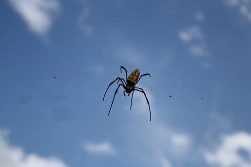 Spider, Insect, Bug, Arachnid, Blue, Sky, Flying