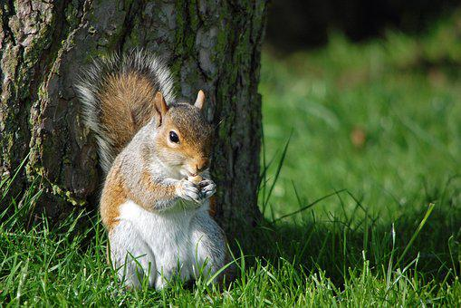 Squirrel, Eating Nut, Nature, Animal, Wildlife, Cute