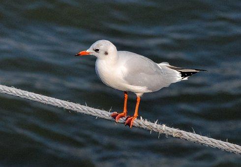 Bird, Animal World, Waters, Nature, Sea, Animal, Bill