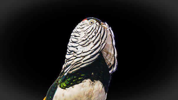 Bird, Nature, Feather, Animal, Wildlife, Wing, Wild
