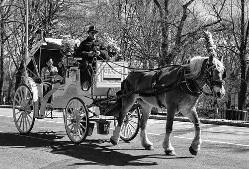 Carriage, People, Transportation System, Horse, Park