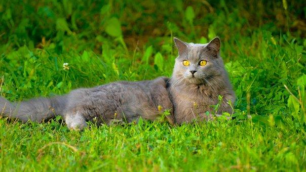 Animal, Grass, Nature, Mammal, Cute, Cat, Little, Pet