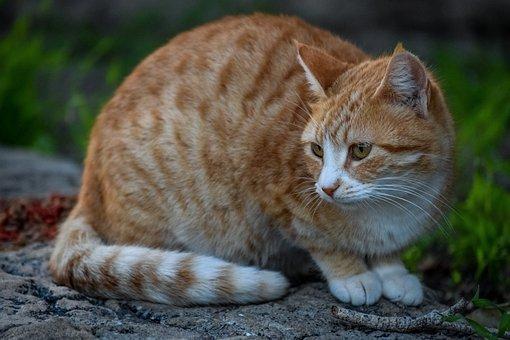 Cat, Stray, Tabby, Cute, Animal, Nature, Portrait