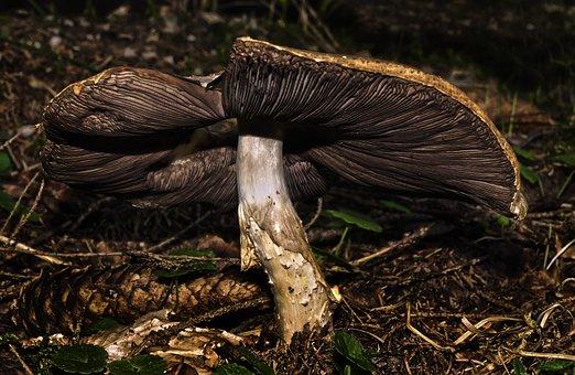 Mushroom, Disc Fungus, Old, Forest Floor, Bottom, Close