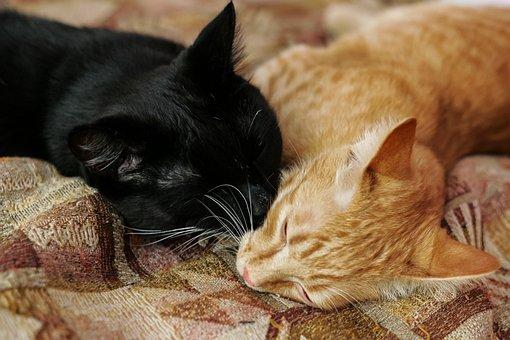 Cute, Animals, Pet, Little, Home, Portrait, Cat, Young