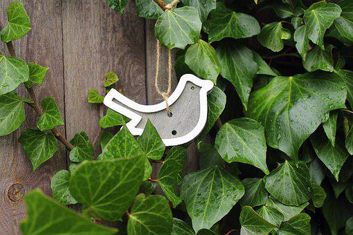 Bird, Pendant, Decoration, Early Spring, Leaf, Ivy