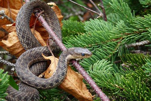 Nature, Tree, Snake, Fauna, Animal
