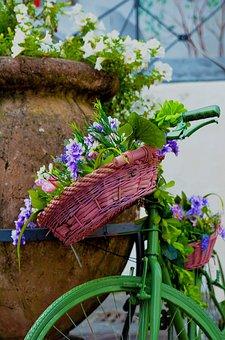Nature, Flower, Flora, Leaf, Outdoors, Color