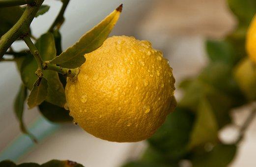 Fruit, Lemon, Citrus, Fruit Tree, Acidity
