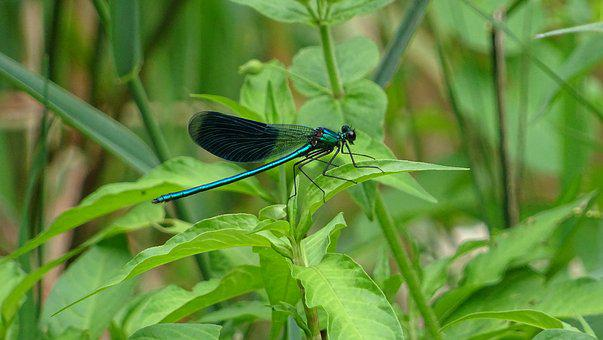 Nature, Leaf, Insect, Plant, Outdoor, Dragonfly
