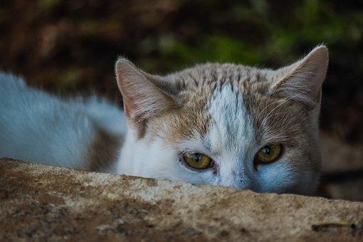 Animal, Cat, Cute, Mammal, Nature, Outdoors, Eye