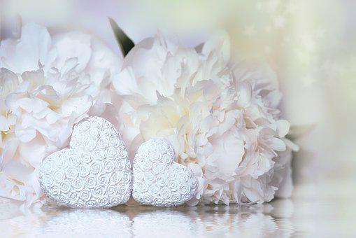 Heart, Peony, White, Plant, Love, Pair, Blossom, Bloom
