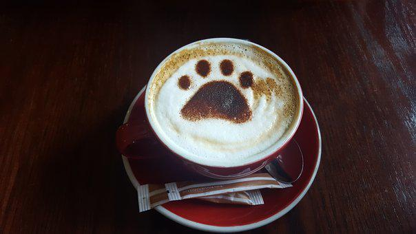 Coffee, Espresso, Drink, Cappuccino, Cup, Foam, Paw
