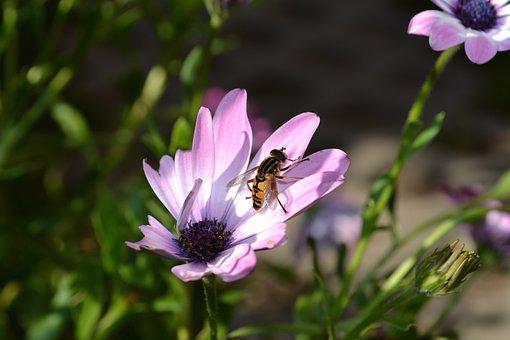 Flower, Nature, Plant, Leaf, Summer, Close, Petal