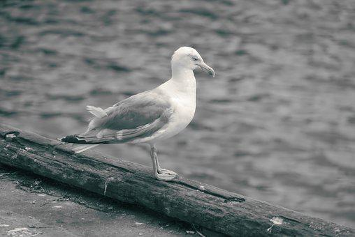 Body Of Water, Bird, Sea, Nature, Fauna, Outdoor, Wing