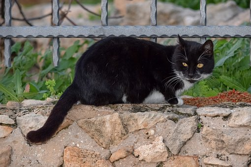 Animal, Nature, Mammal, Cute, Cat, Stray, Outdoors
