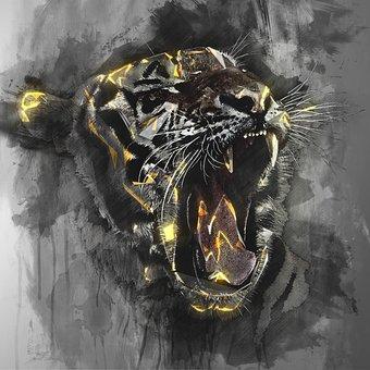 Tiger, Head, Wildlife, Animal, Wild, Feline, Cat