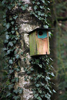 Ivy, Tree, Wood, Climber, Leaf, Bird Feeder
