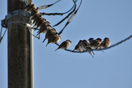 Animal, Sky, Pole, Electric Cable, Bird, Wild Birds