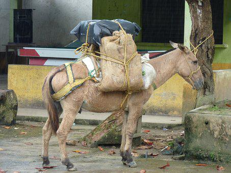 Loading, Market, Pack, Colombia, Donkey