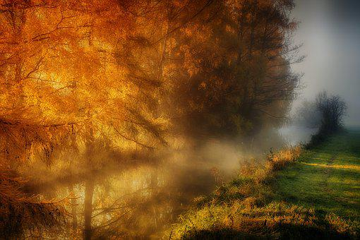 Nature, Tree, Landscape, Dawn, Sun, Autumn, Bright